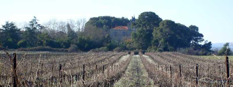 Le domaine de Mallemort : vue à partir des vignes